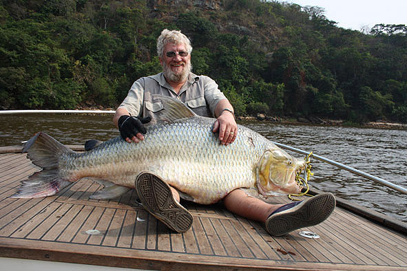 Goliath Tiger Fish Eating Crocodile